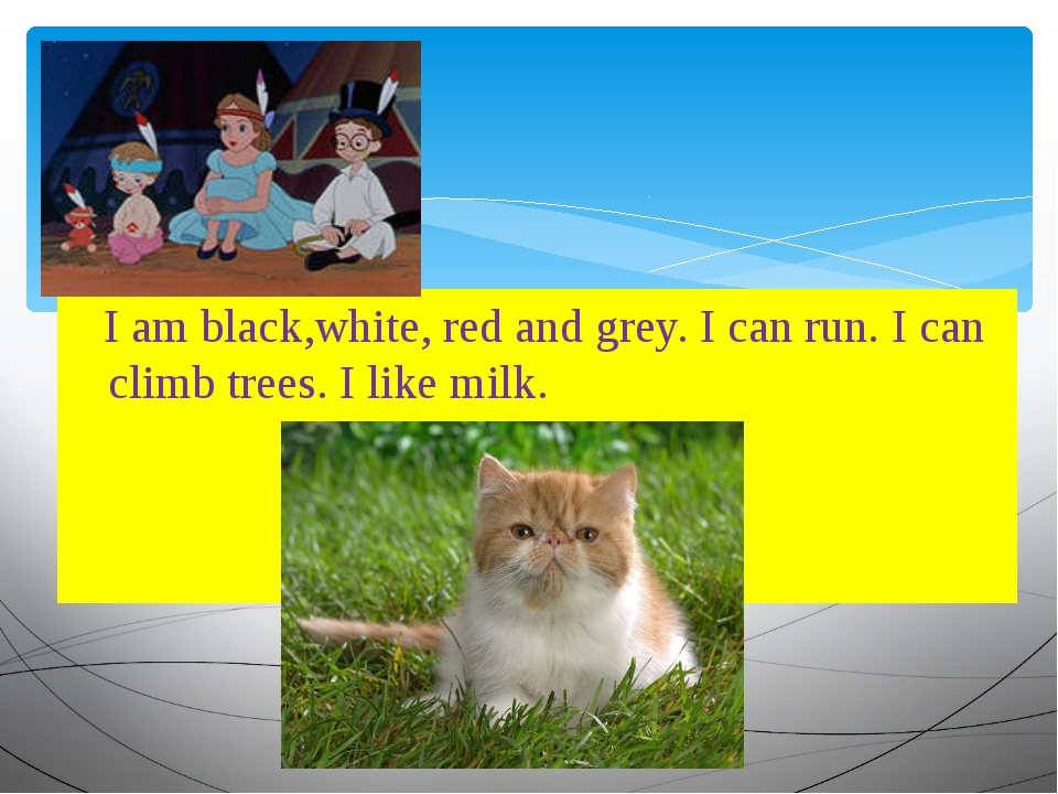 I am black,white, red and grey. I can run. I can climb trees. I like milk.