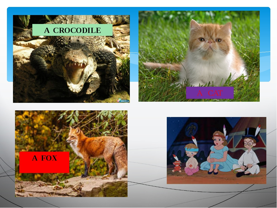 A CAT A CROCODILE A FOX FOX
