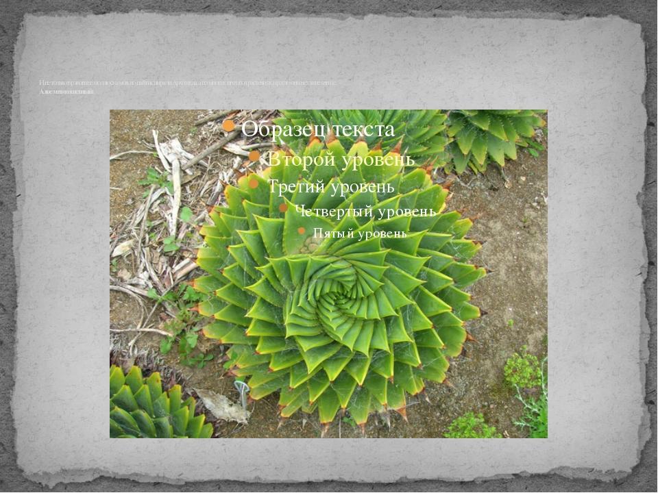 И не только в раковине моллюска можно найти спирали Архимеда, а во многих цв...