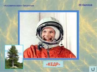 «Космическая» биология 20 баллов Назовите «хвойный» позывной Юрия Гагарина. «