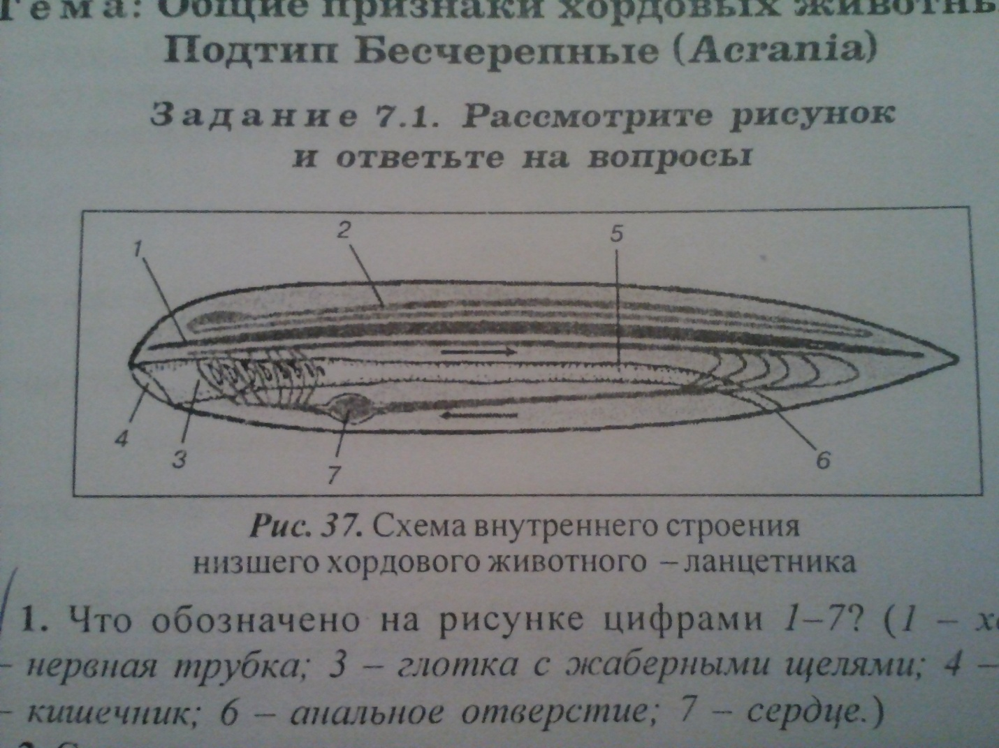 C:\Users\Елена Сергеевна\Desktop\IMG041.jpg