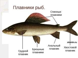 Плавники рыб. Грудной плавник Брюшные плавники Анальный плавник Хвостовой пла