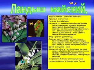 Ландыш майский – семейство лилейных. Красивый многолетник. Растение бесстебел