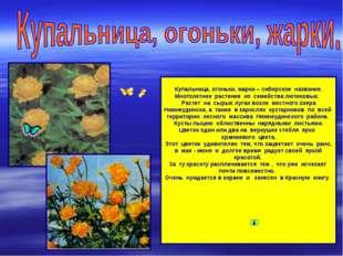 Купальница, огоньки, жарки – сибирское название. Многолетнее растение из сем
