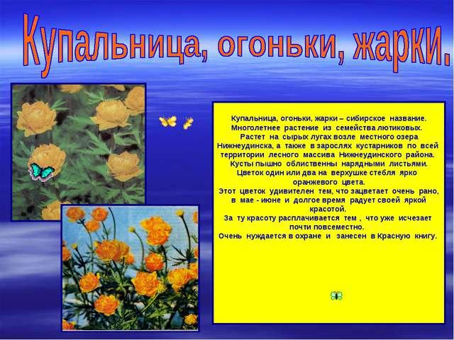 Купальница, огоньки, жарки – сибирское название. Многолетнее растение из сем...