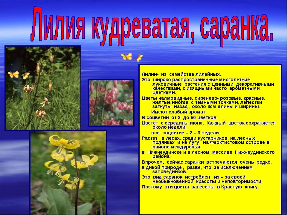 Лилии- из семейства лилейных. Это широко распространенные многолетние лукови...