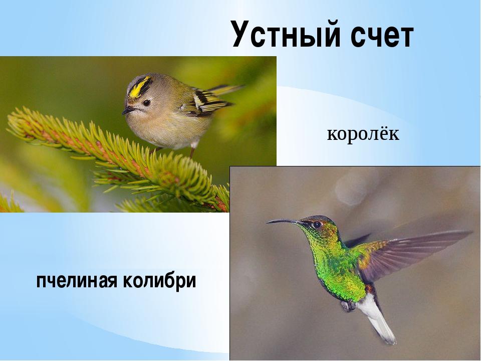 Устный счет королёк пчелиная колибри