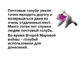 Почтовые голуби умели точно находить дорогу и возвращаться даже из очень отд