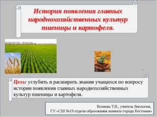 История появления главных народнохозяйственных культур пшеницы и картофеля.