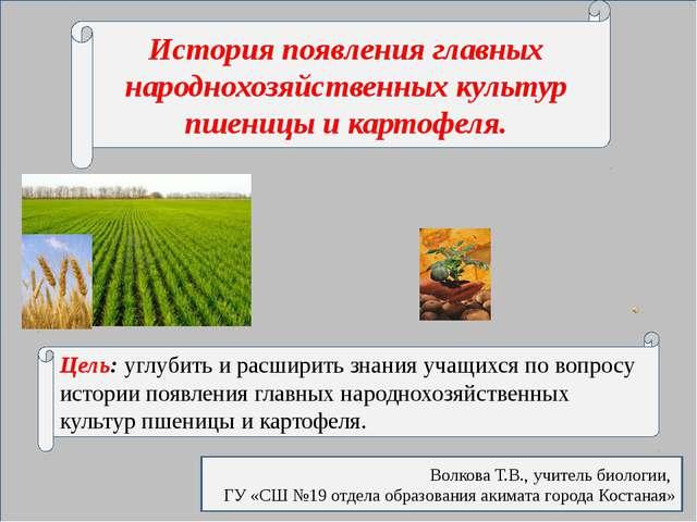 История появления главных народнохозяйственных культур пшеницы и картофеля....