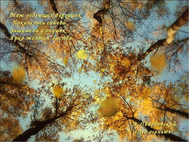 Меж редеющих верхушек Показалась синева. Зашумела у опушек Ярко-желтая листва...
