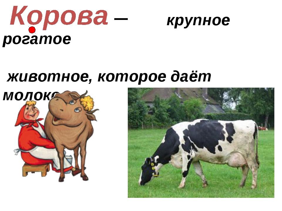 крупное рогатое животное, которое даёт молоко.