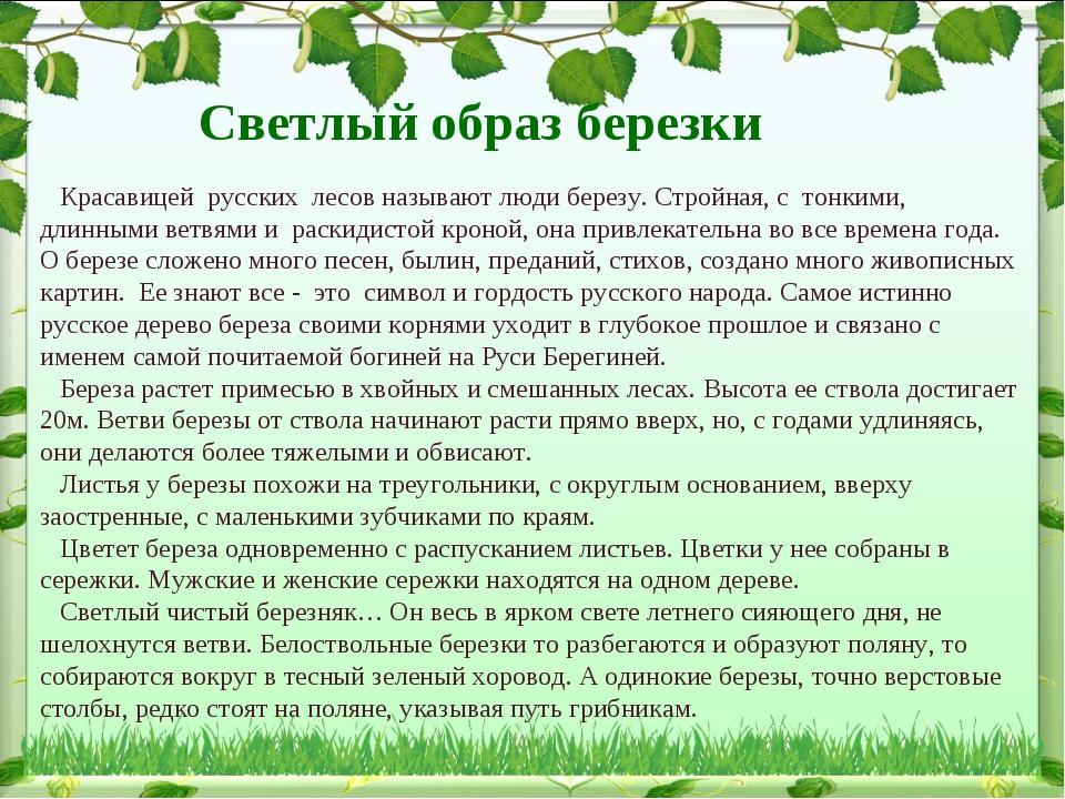 Красавицей русских лесов называют люди березу. Стройная, с тонкими, длинными...