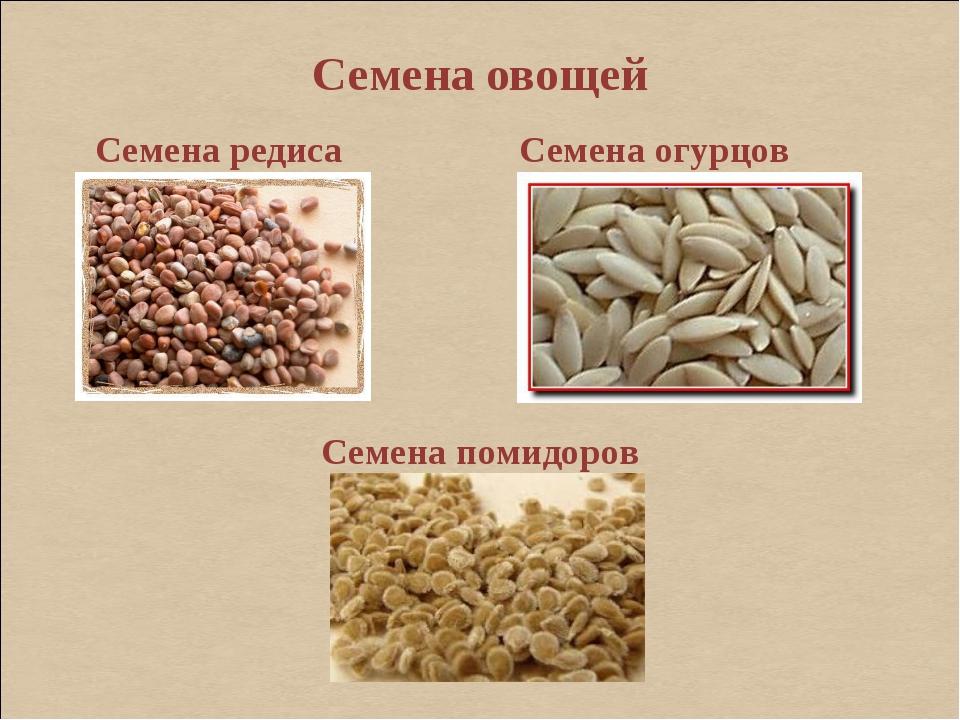Семена овощей Семена редиса Семена огурцов Семена помидоров