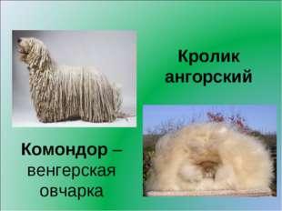 Кролик ангорский Комондор – венгерская овчарка