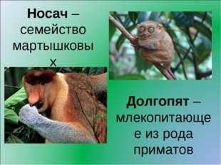 Носач – семейство мартышковых Долгопят – млекопитающее из рода приматов