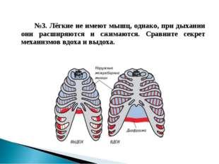 №3. Лёгкие не имеют мышц, однако, при дыхании они расширяются и сжимаются.