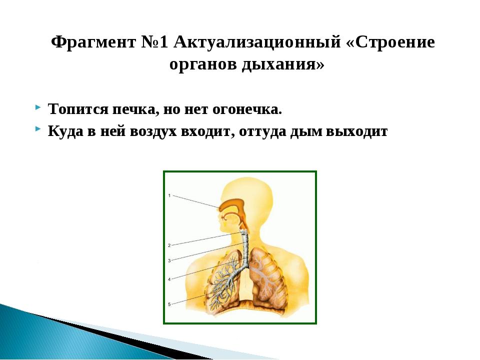 Фрагмент №1 Актуализационный «Строение органов дыхания» Топится печка, но нет...