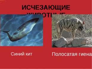 ИСЧЕЗАЮЩИЕ ЖИВОТНЫЕ Синий кит Полосатая гиена