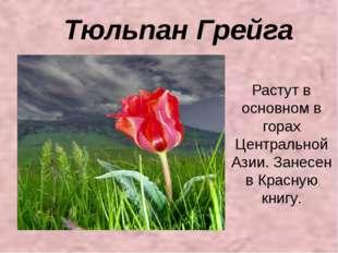 Тюльпан Грейга Растут в основном в горах Центральной Азии. Занесен в Красную