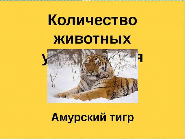 Количество животных уменьшается Амурский тигр