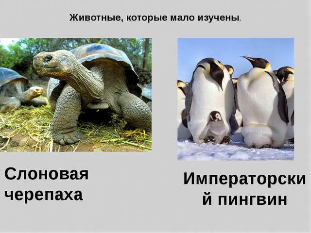 Животные, которые мало изучены. Слоновая черепаха Императорский пингвин
