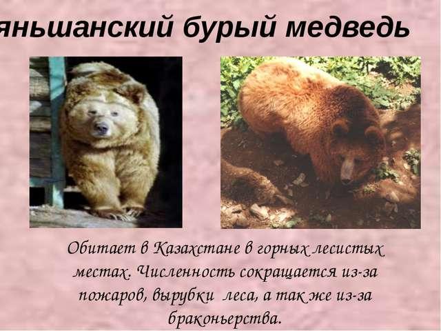 Тяньшанский бурый медведь Обитает в Казахстане в горных лесистых местах. Чис...