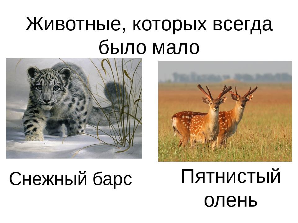 Животные, которых всегда было мало Снежный барс Пятнистый олень