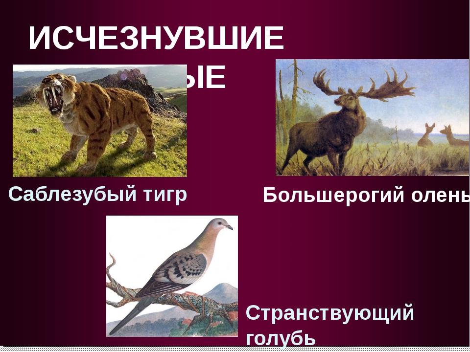 ИСЧЕЗНУВШИЕ ЖИВОТНЫЕ Большерогий олень Саблезубый тигр Странствующий голубь