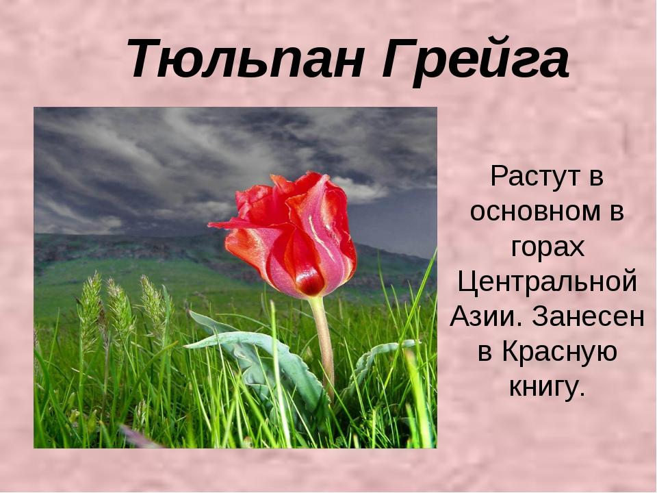 Тюльпан Грейга Растут в основном в горах Центральной Азии. Занесен в Красную...