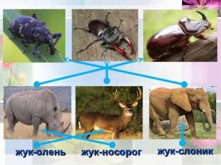жук-олень жук-слоник жук-носорог