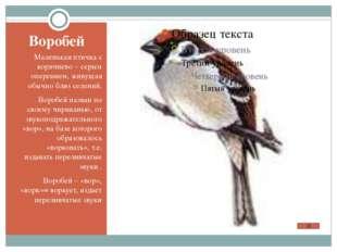 Воробей Маленькая птичка с коричнево – серым оперением, живущая обычно близ с