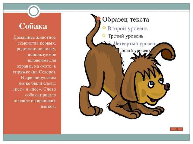 В кроссворде спрятались названия животных. Найди их. Выпишите словарные слова...