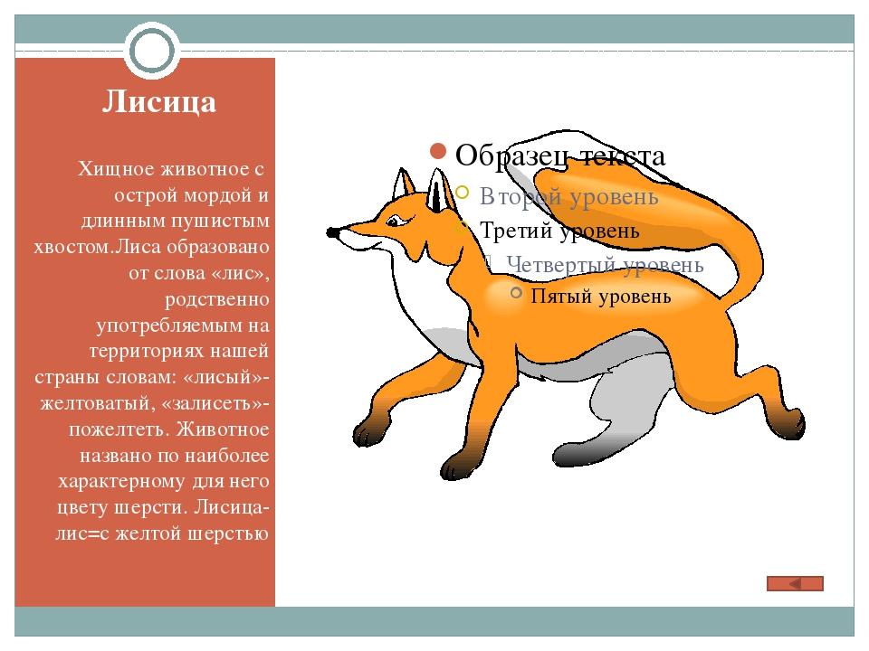 Исконно русское слово, происходящее от народного «лягуха», «лягуша»- «бедро»...