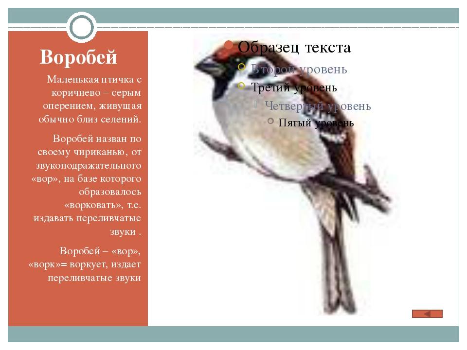Воробей Маленькая птичка с коричнево – серым оперением, живущая обычно близ с...