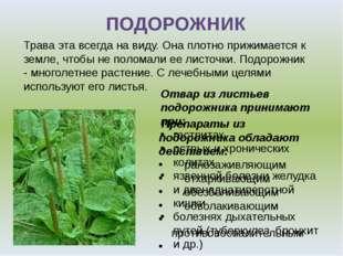 Отвар из листьев подорожника принимают при: гастритах острых и хронических ко