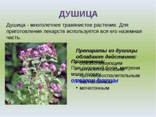Применение: При головной боли, мигрени моют головуотваром душицы ДУШИЦА Души