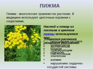 ПИЖМА Настой и отвар из листьев и цветковпижмы используется при: гипосцидном