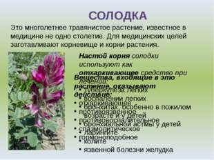Это многолетнее травянистое растение, известное в медицине не одно столетие.