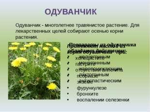 ОДУВАНЧИК Одуванчик - многолетнее травянистое растение. Для лекарственных цел