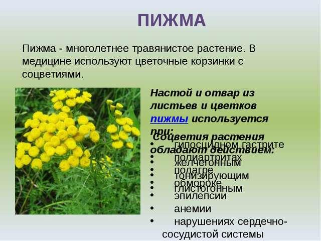 ПИЖМА Настой и отвар из листьев и цветковпижмы используется при: гипосцидном...
