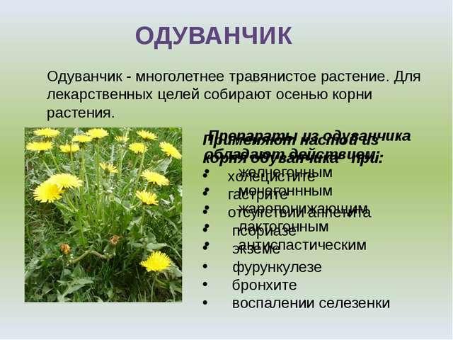 ОДУВАНЧИК Одуванчик - многолетнее травянистое растение. Для лекарственных цел...