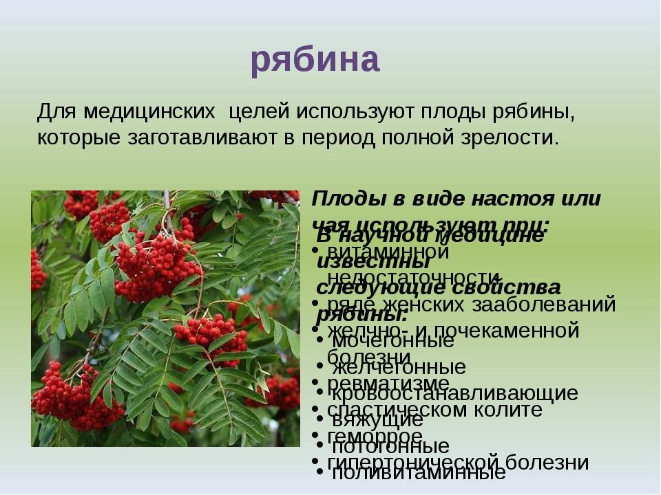рябина Для медицинских целей используют плоды рябины, которые заготавливают в...