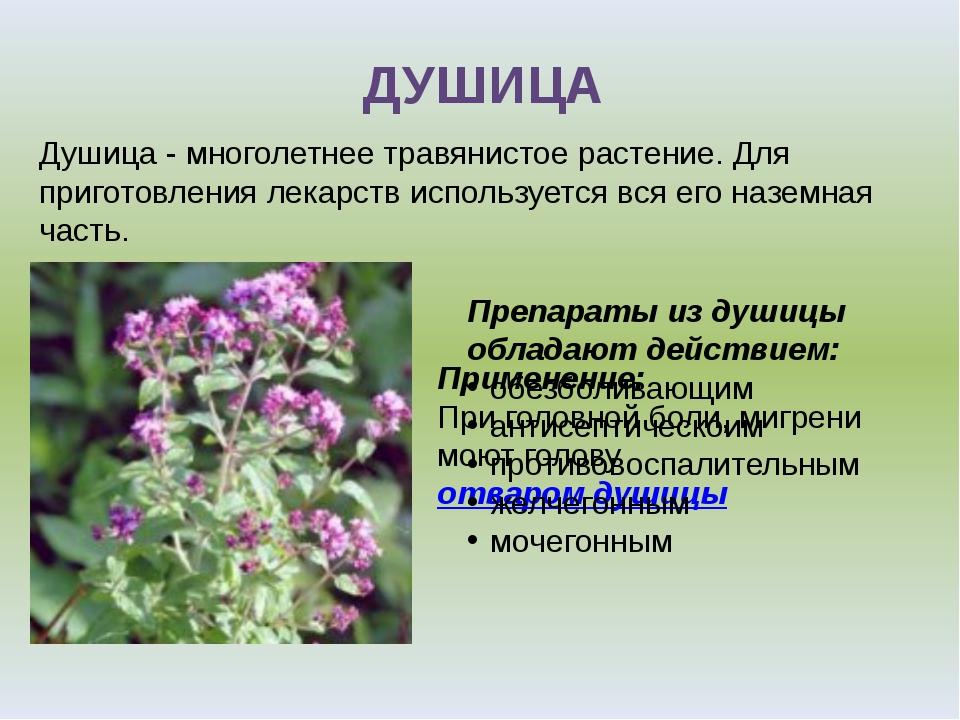 Применение: При головной боли, мигрени моют головуотваром душицы ДУШИЦА Души...