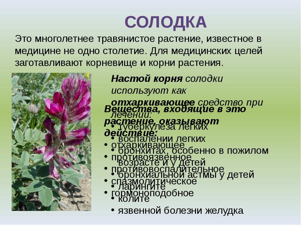 Это многолетнее травянистое растение, известное в медицине не одно столетие....