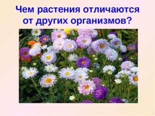 Чем растения отличаются от других организмов?