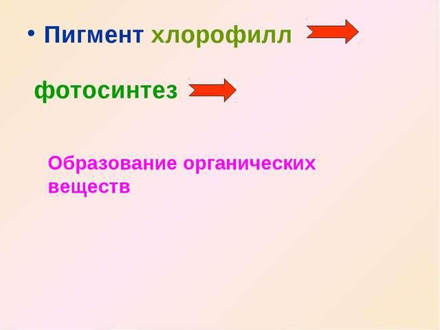 Пигмент хлорофилл фотосинтез Образование органических веществ