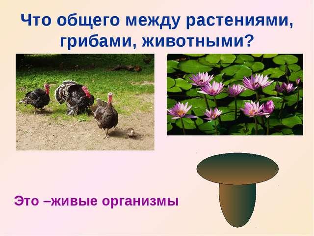 Что общего между растениями, грибами, животными? Это –живые организмы