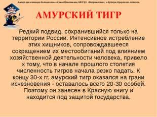 АМУРСКИЙ ТИГР Редкий подвид, сохранившийся только на территории России. Интен