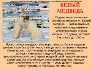 БЕЛЫЙ МЕДВЕДЬ Хищное млекопитающее семейства медвежьих. Белый медведь— самый